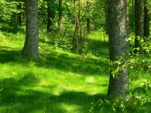 25,000 new trees will be planted in Warsaw forests