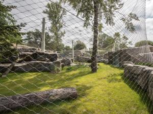 Snow leopards return to the Warsaw Zoo